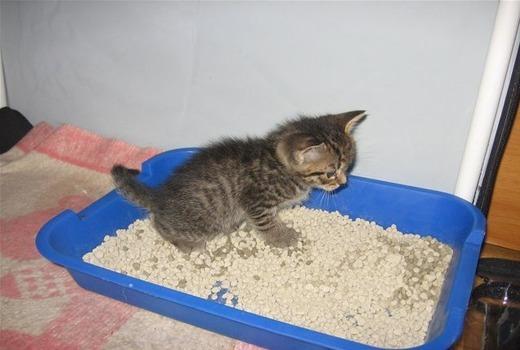 У кота понос - что делать и чем лечить