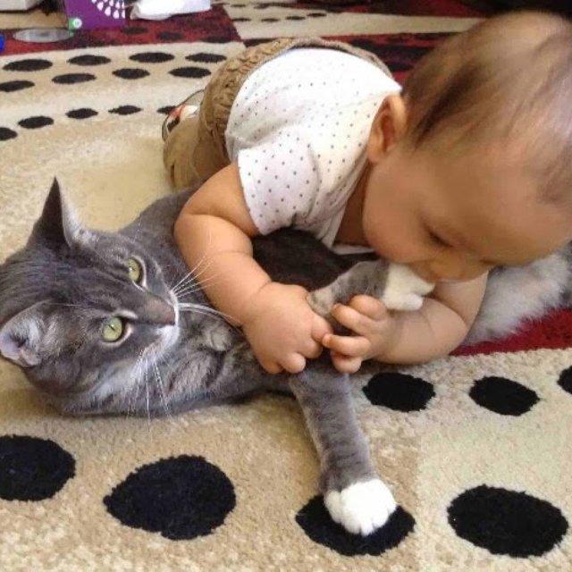 Как отучить кошку кусаться - причины и методы отучения