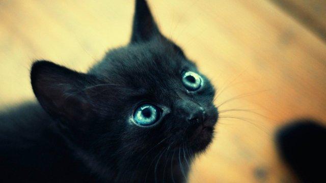 Как видят кошки наш мир - в каком цвете видят