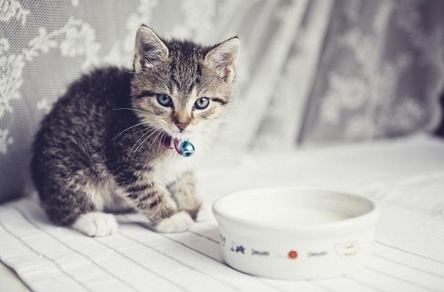 Можно ли давать котам кефир - польза и вред
