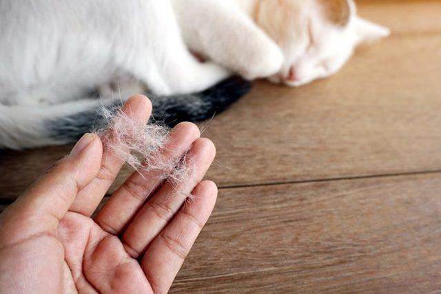 3 причин, почему у кошек выпадает шерсть