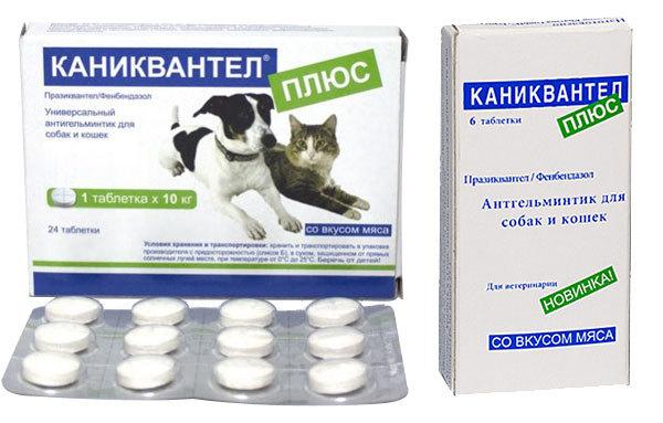 Каниквантел плюс для кошек - инструкция по применению препарата