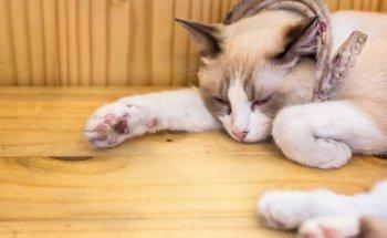Зантак для кошек - инструкция по применению, дозировка