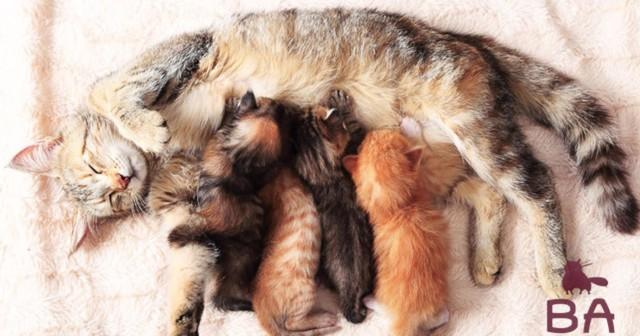 Прерывание беременности у кошек: можно ли это делать, последствия, опасности