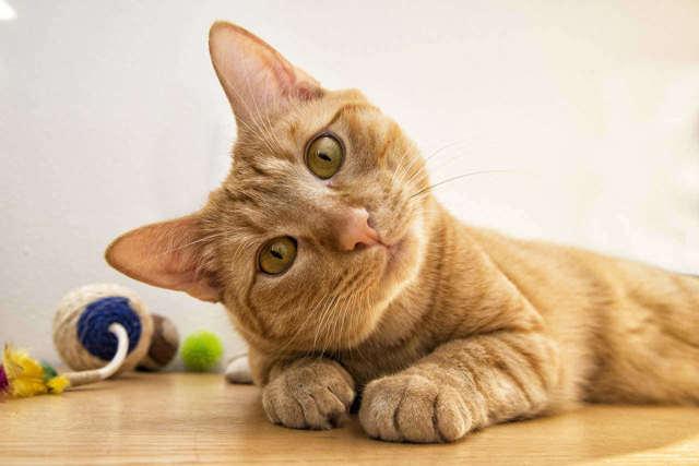 Почему кошка бегает за своим хвостом