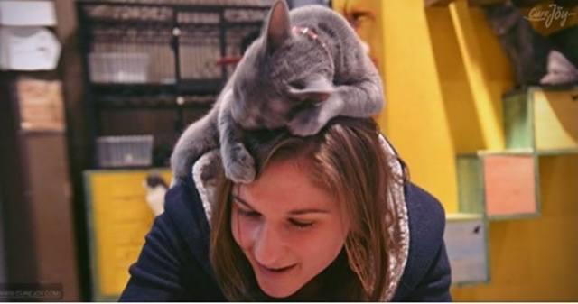 7 причин почему кот лижет голову и волосы