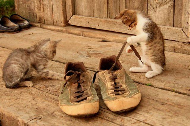 5 причин почему кот лижет подмышки