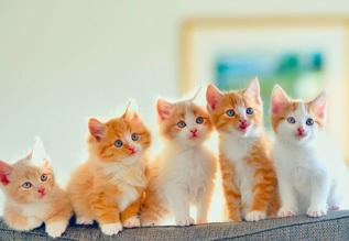 Клички для котов мальчиков - прикольные и оригинальные
