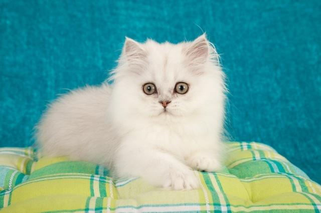 Туберкулез у кошек - симптомы и лечение