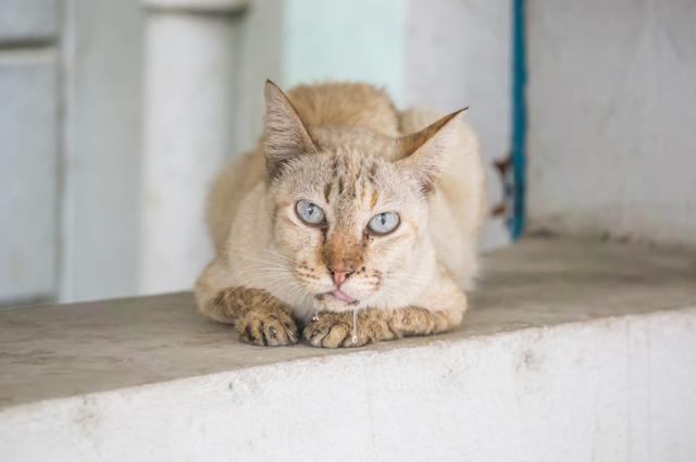 Суспензия Празицид для котят - инструкция по применению