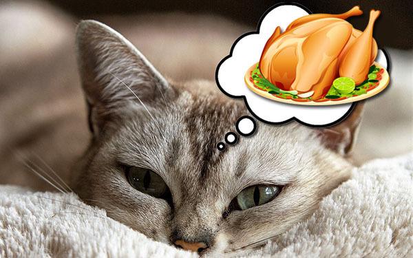 Чем кормить кошку после отравления - диета и питьевой режим