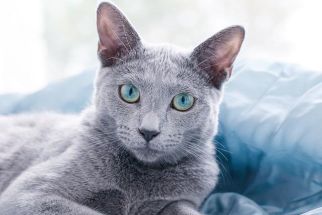 10 симптомов сахарного диабета у кошек - лечение и причины