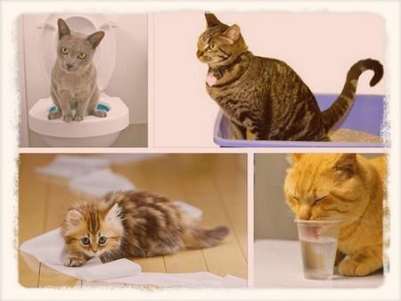 Слабительное для кошек в домашних условиях при запоре