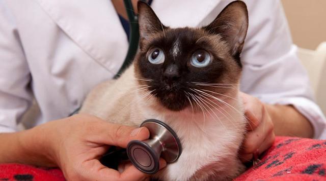 Кошка простыла и чихает - что делать, лечение