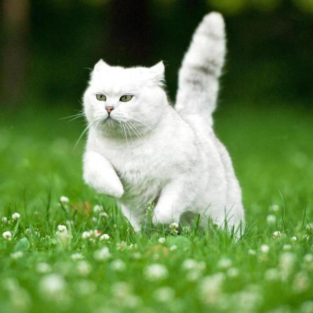 Отодектин для кошек – инструкция по применению, способ применения и состав