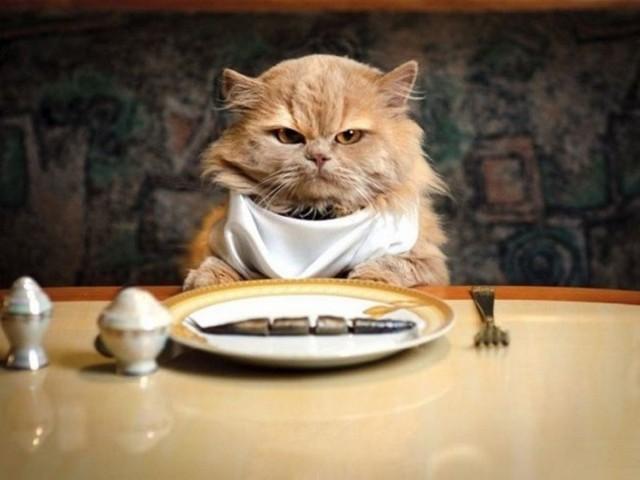 Кошка не ест и не пьет несколько дней вялая спит постоянно