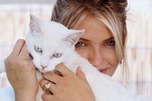 Фоспасим для кошек: инструкция по применению
