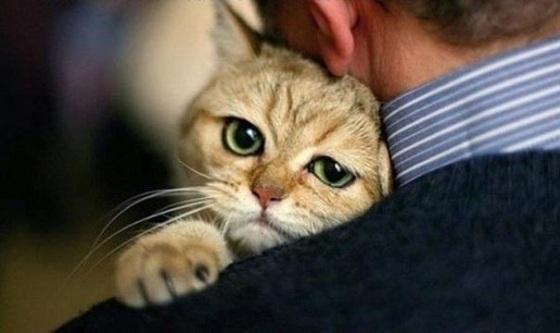 Карсил для кошек: инструкция по применению