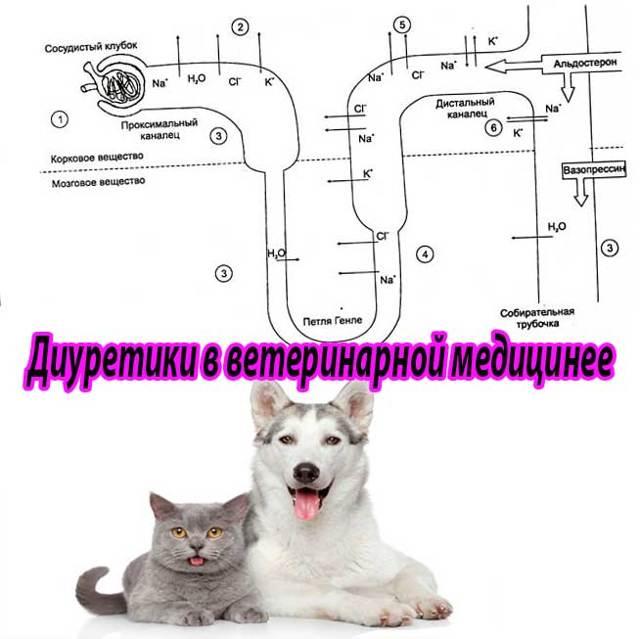 Фуросемид для кошек - инструкция по применению