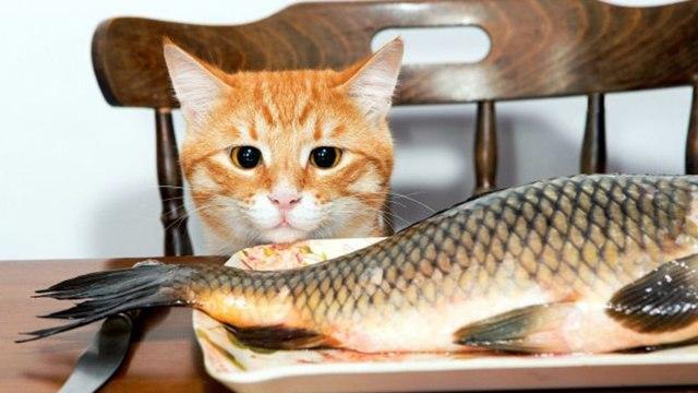 Почему котам нельзя рыбу - вред рыбы