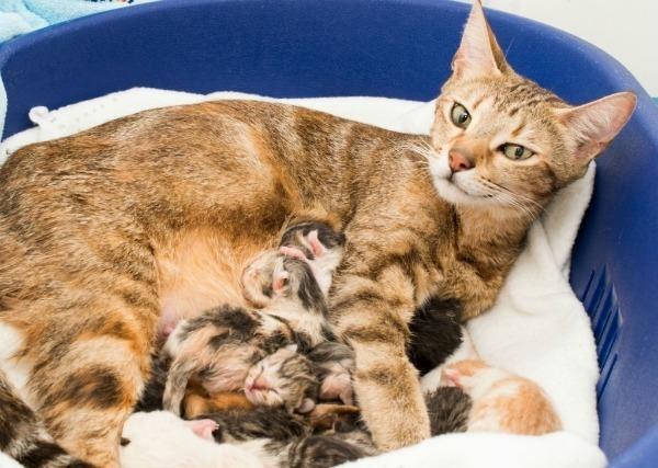 7 причин почему котенок не ест - последствия