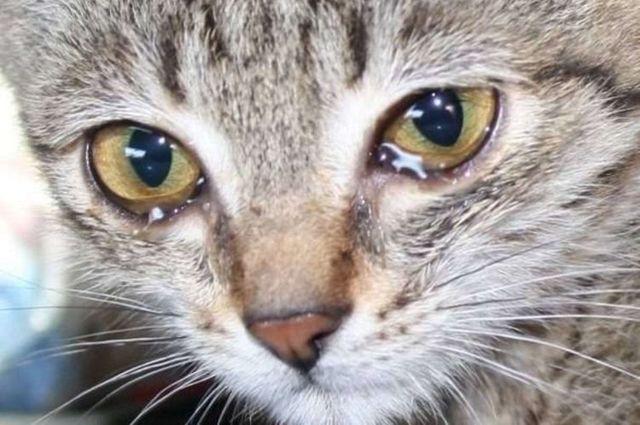 18 причин почему кот чихает - что делать