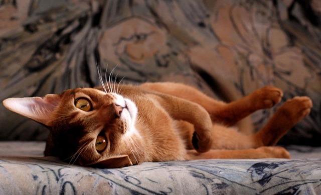 8 причин почему кошка писает на диван - как отучить?