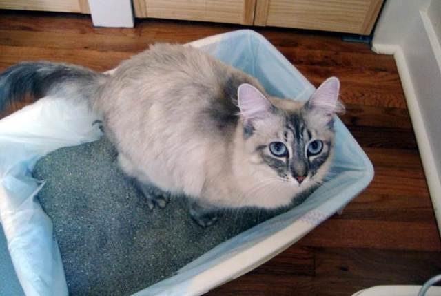 Осложнения после стерилизации кошки - какие бывают