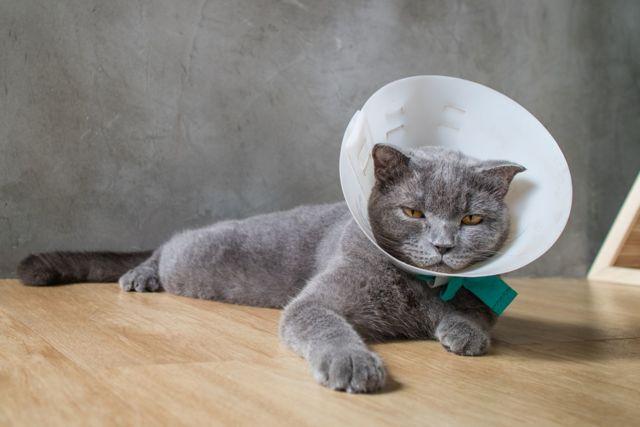9 причин почему у кошки опухла нижняя губа - симптомы и лечение