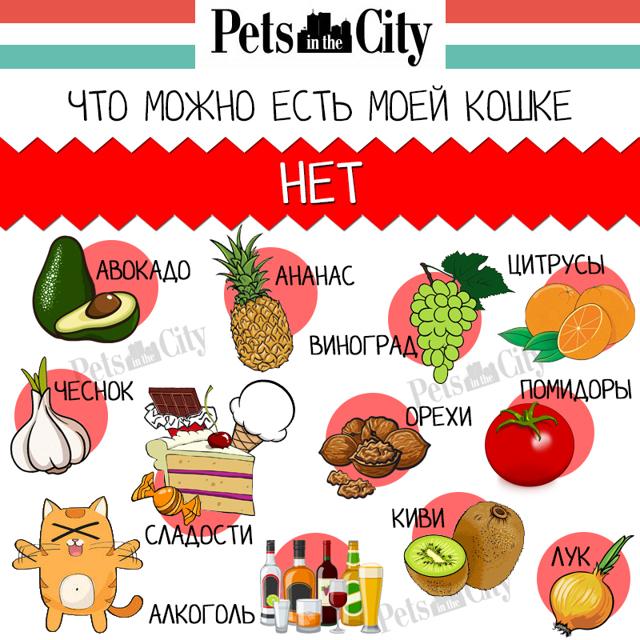 Можно ли давать кошкам картошку