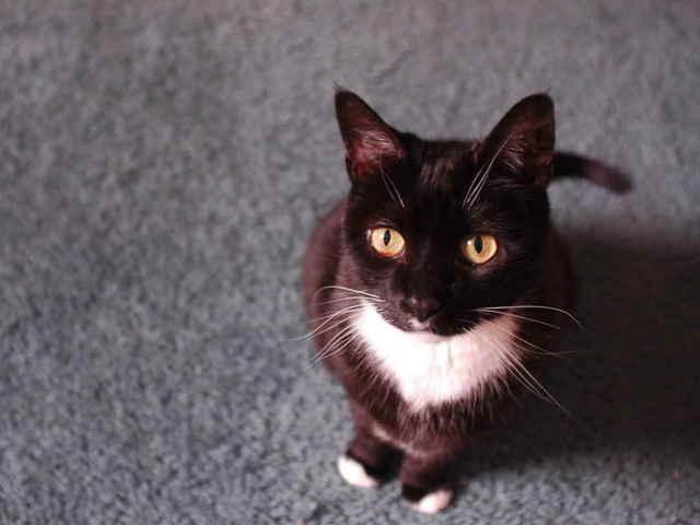 13 причин почему кот ходит в туалет с кровью - как лечить