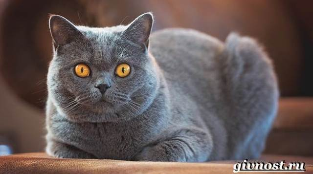 Редкие породы кошек - список пород с описанием