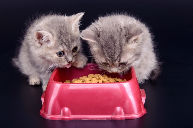 Гуаби корм для кошек: описание и состав