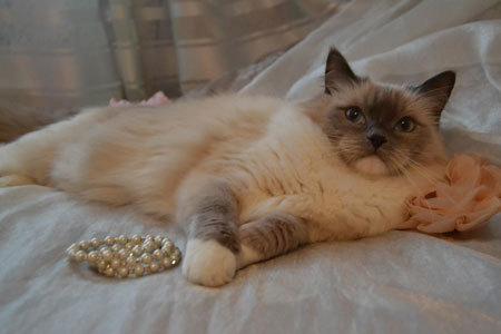 Норма сахара в крови у кошек: ТОП причины повышения и понижения