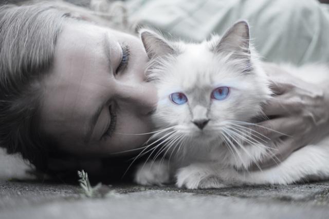 Чем опасные кошки для человека - 6 заболеваний