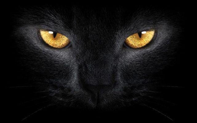 Как видят кошки людей - какие цвета они различают