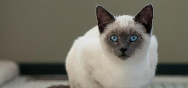 5 пород кошек которые меньше всего линяют