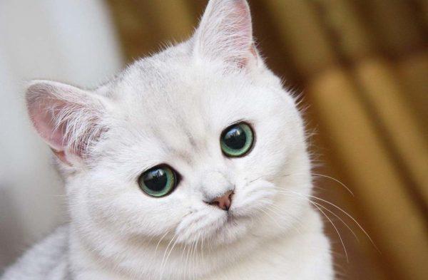 6 причин почему у котенка текут глаза
