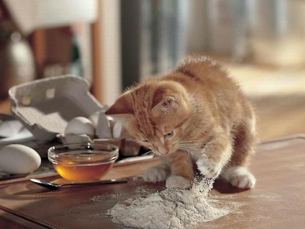 Мед кошкам - можно ли давать