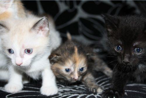 Нужно ли делать прививки котятам?