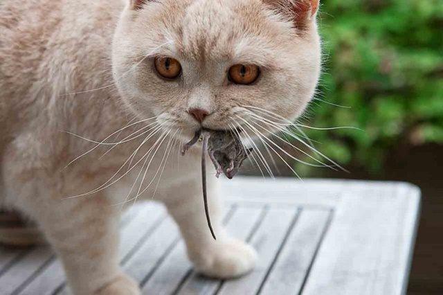 Глисты у кошек - фото с названиями, описание