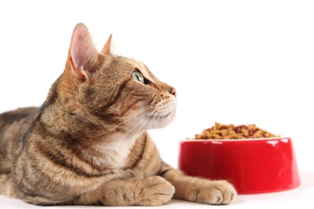 Корм Ориджен для кошек - состав, виды, плюсы и минусы