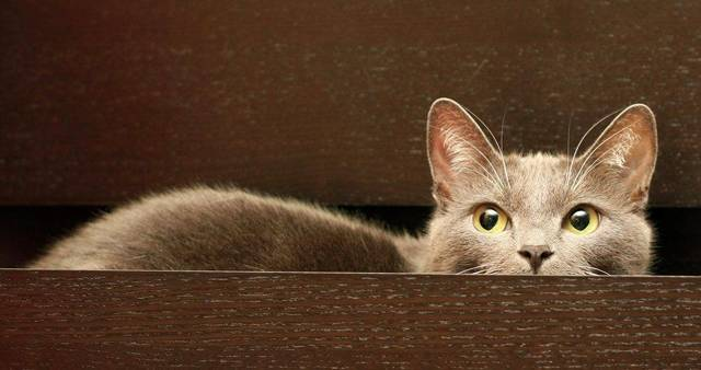 Кошка перестала ходить в лоток - что делать