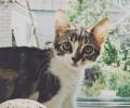У кота гниет ухо: причины и лечение