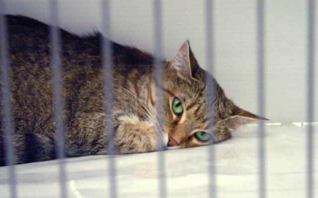 Прививка от бешенства котенку - когда делать и последствия