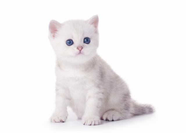 Аверсектиновая мазь для кошек - инструкция по применению
