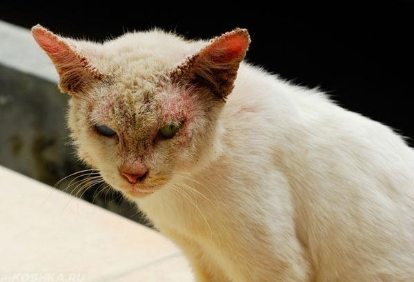 9 признаков как понять что кот заболел - симптомы и болезни