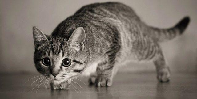 Как называются усы у кошек по научному