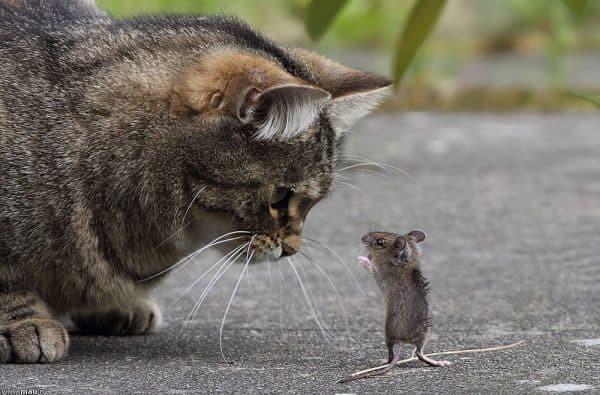 Едят ли кошки мышей и почему