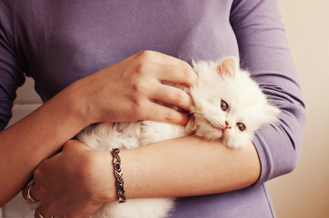 Можно ли котенку стричь когти, с какого возраста начинать